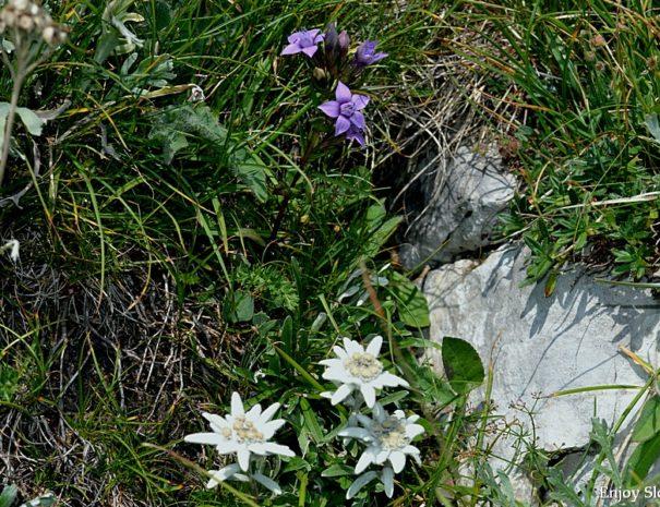 Botanic walk Slovenia