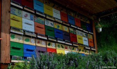 Beekeeping Slovenia