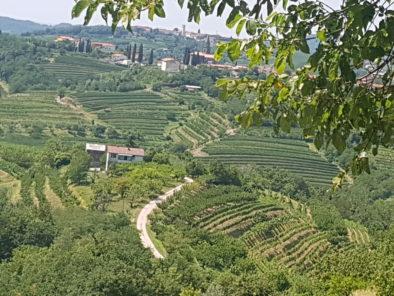 Slovenia_Goriska_brda_wine_tasting_tours_2