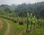 Slovenia_Styria_Wine_Region_Stajerska_What_to_Do_Tours03