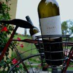 Fine Slovenian Wine