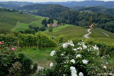 Wine tasting tour Slovenia Styria wine region 2